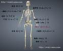 体の部位の名前 骨の場所と介護用語を図で紹介
