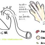 バイタル測定方法と血圧変化の留意点、高齢者の血圧の測り方
