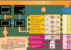 介護食品 スマイルケア食・ユニバーサルデザインフードの選び方