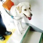 身体障害者補助犬法って?盲導犬・介助犬・聴導犬の役割と対応のポイント