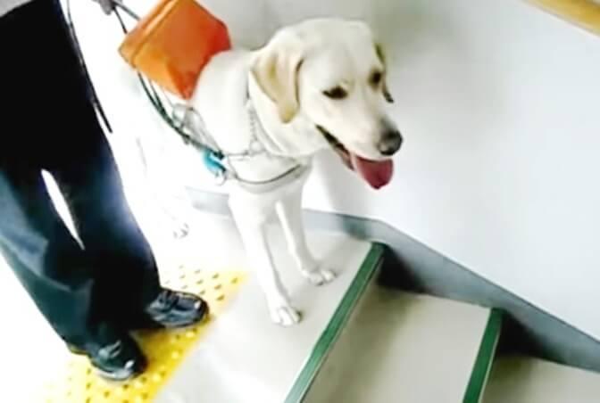 身体障害者補助犬とは 盲導犬・介助犬・聴導犬の役割と対応のポイント