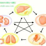 五臓六腑(ごぞうろっぷ) 漢方薬 の考え方