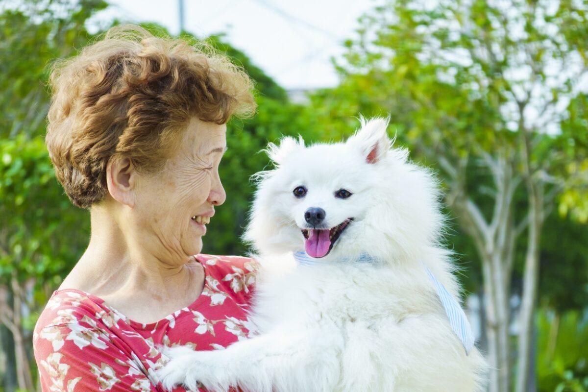 高齢者とペットの犬